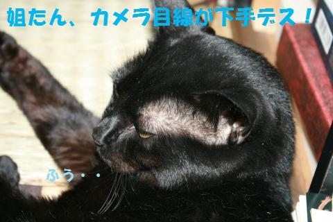 039_convert_20101018171948.jpg