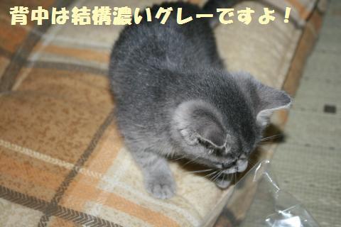 039_convert_20111031121443.jpg