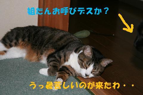 040_convert_20100716231622.jpg