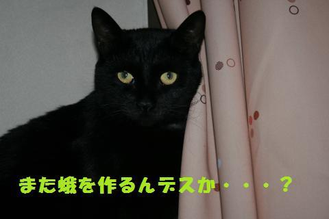 040_convert_20110515152451.jpg