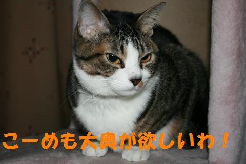 041_convert_20100131201004.jpg