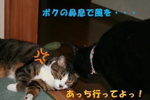 041_convert_20100716231745.jpg