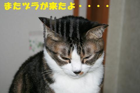 041_convert_20101124195212.jpg