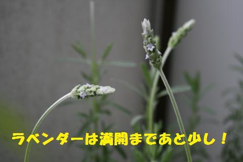 041_convert_20110410212310.jpg
