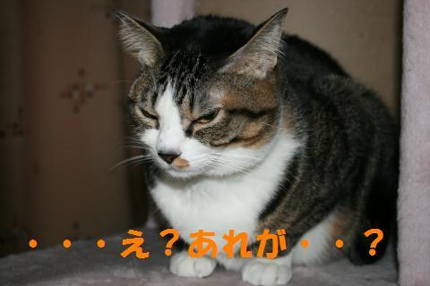 042_convert_20100131200828.jpg