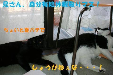 042_convert_20100807133523.jpg