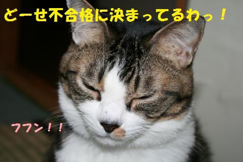 042_convert_20101105195705.jpg