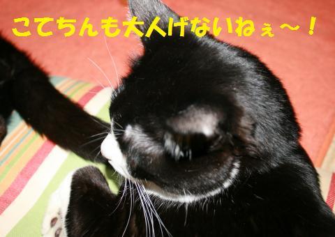 043_convert_20100417234847.jpg