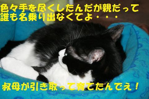 044_convert_20100814165030.jpg