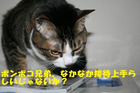 044_convert_20110228232326.jpg