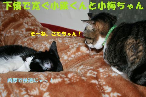 044_convert_20110306182116.jpg