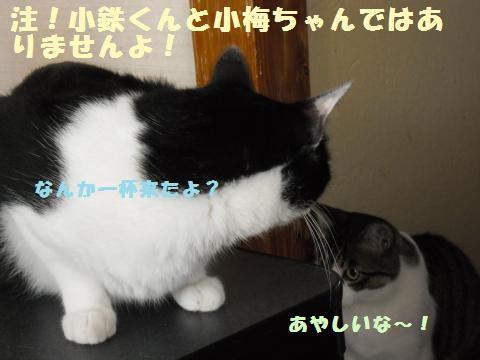 044_convert_20110715142456.jpg