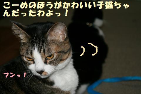 044_convert_20111102234818.jpg