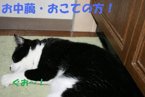 045_convert_20100131201306.jpg