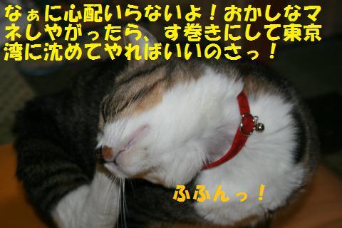 045_convert_20101023000336.jpg