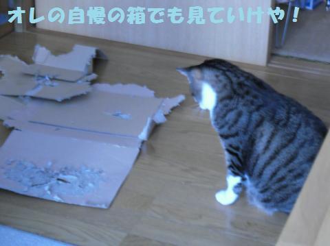 045_convert_20110910165256.jpg