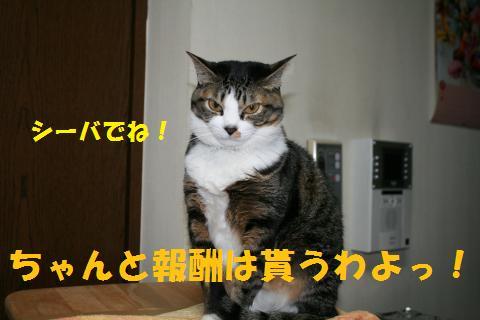 046_convert_20100211223016.jpg