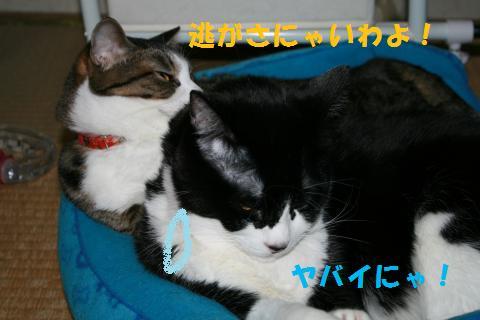 046_convert_20100429000850.jpg