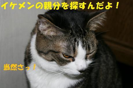046_convert_20100707190556.jpg