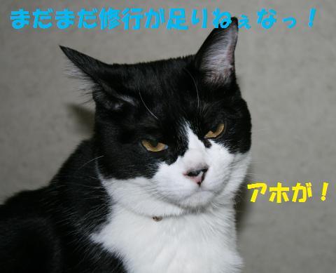 046_convert_20100806202152.jpg
