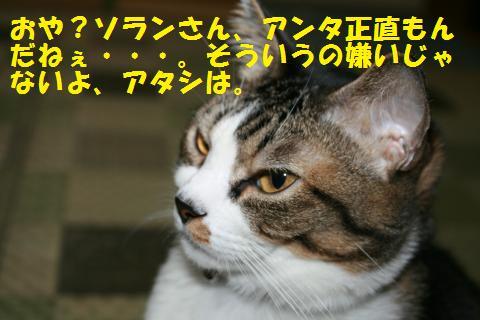 046_convert_20101101222510.jpg