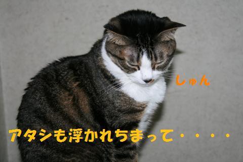 047_convert_20100806202921.jpg