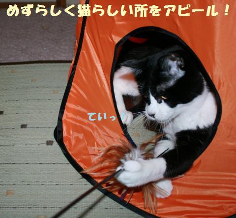 047_convert_20110802180823.jpg