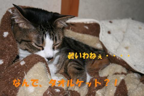 048_convert_20100724233557.jpg