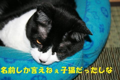 048_convert_20100814165325.jpg