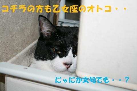 048_convert_20100905213727.jpg