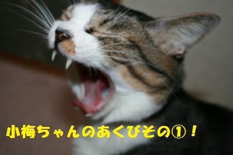 048_convert_20110202201526.jpg