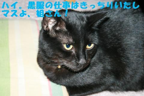 048_convert_20110303204151.jpg