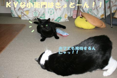 049_convert_20111114170929.jpg