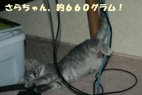 049_convert_20111117194731.jpg