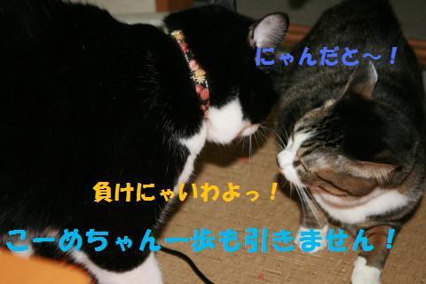 050_convert_20100319202040.jpg