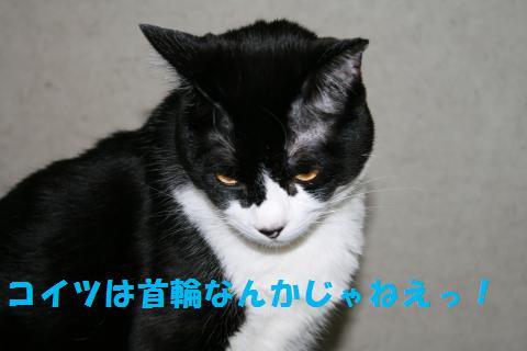 050_convert_20100806202319.jpg