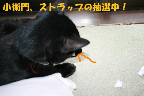 050_convert_20100808205359.jpg