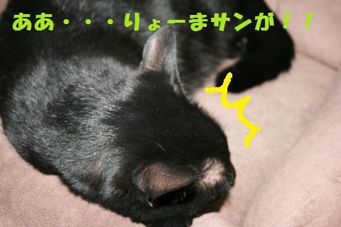 050_convert_20101128230612.jpg