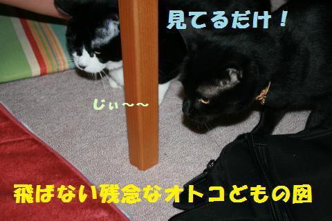 050_convert_20110221225819.jpg