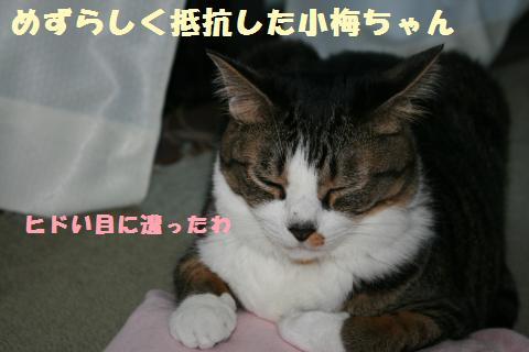 050_convert_20110709233107.jpg