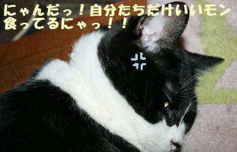 050_convert_20110907203835.jpg