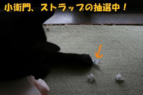 051_convert_20100808205510.jpg