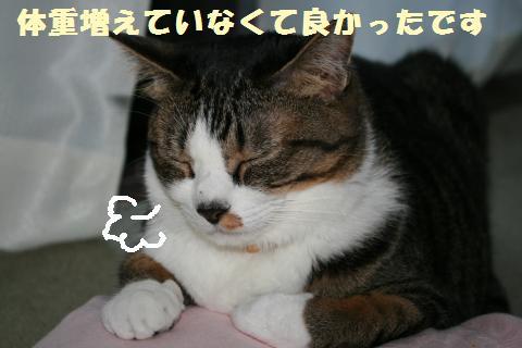 054_convert_20110709233232.jpg
