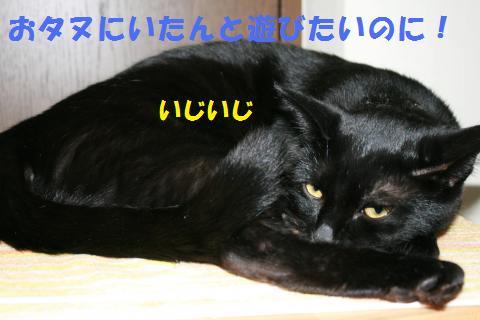 055_convert_20100129223558.jpg