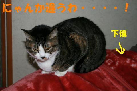 055_convert_20100131201614.jpg