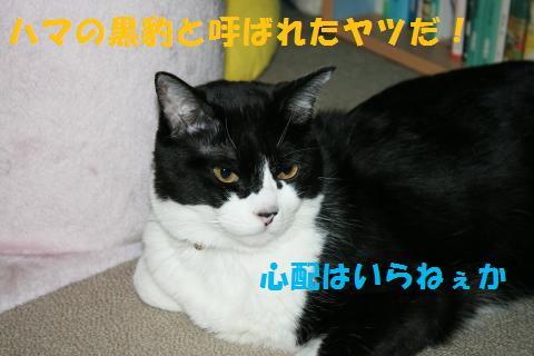 056_convert_20100719205159.jpg