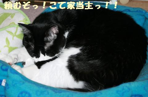 059_convert_20111018231940.jpg