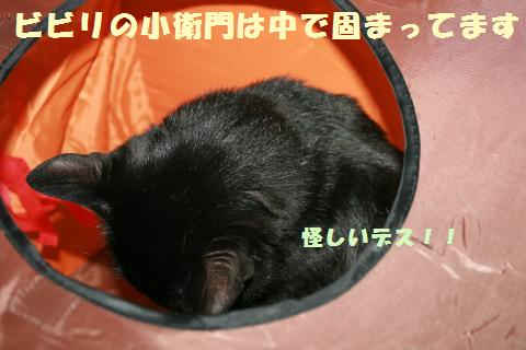 060_convert_20110802181150.jpg