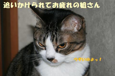 060_convert_20111117194824.jpg