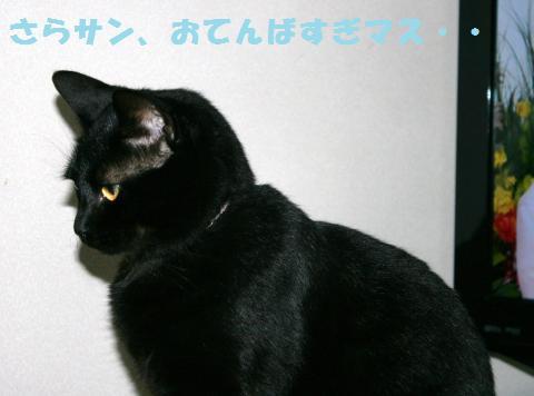 060_convert_20111201204749.jpg